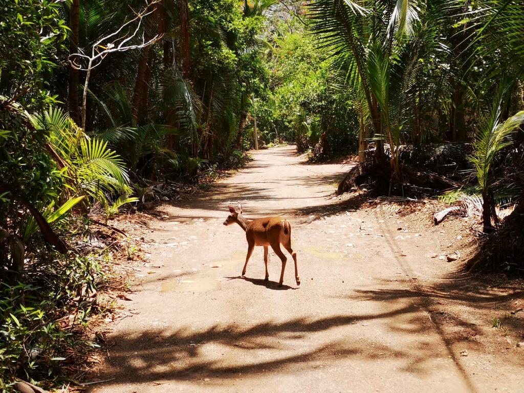 Parc naturel de Curu, Costa Rica