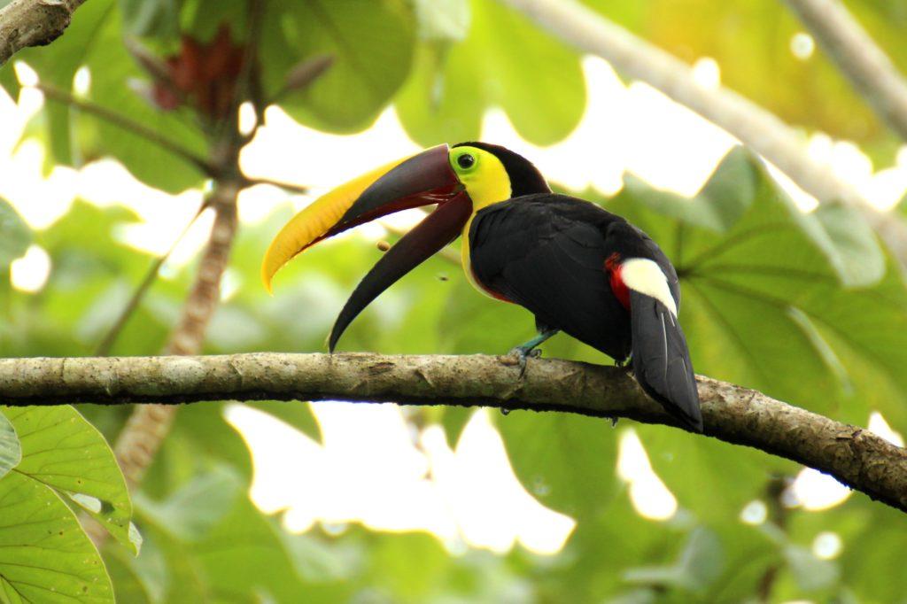 Ecologie Costa Rica