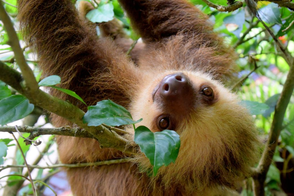 Environnement Costa Rica