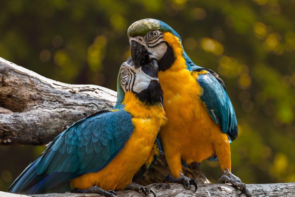 Amazonie Brésil