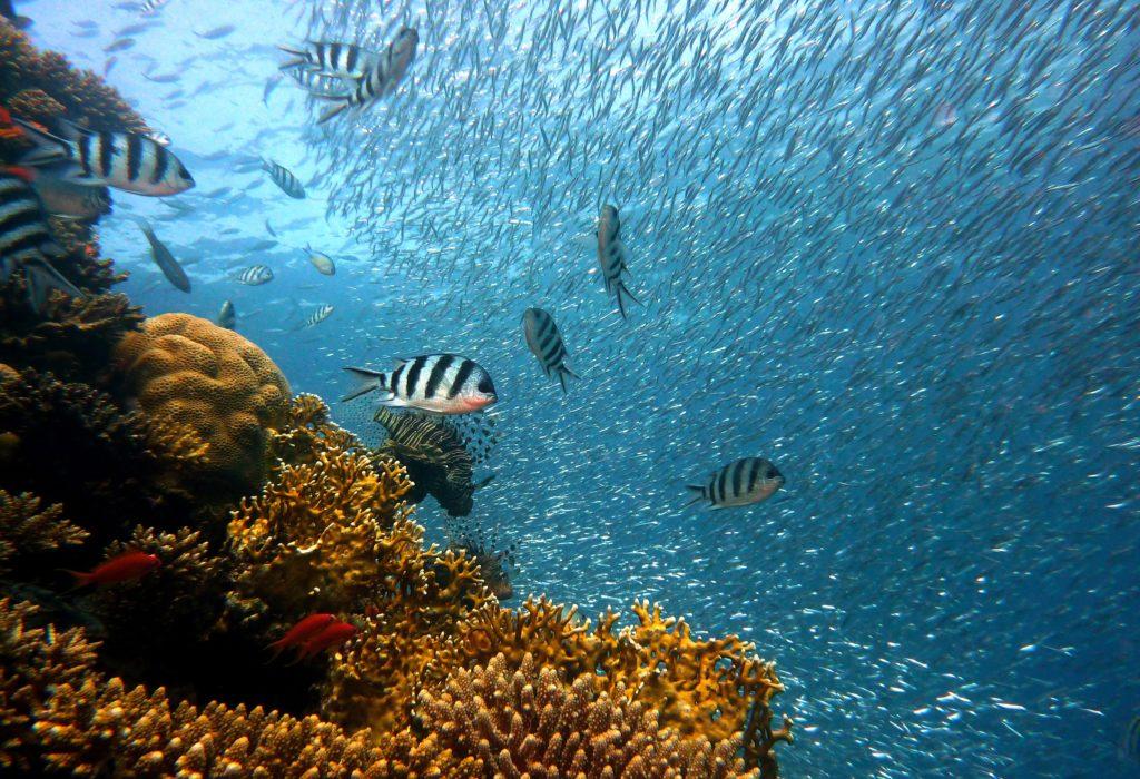 Récifs plongée