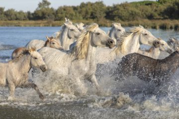 Tourisme au temps du COVID : week-end en Camargue